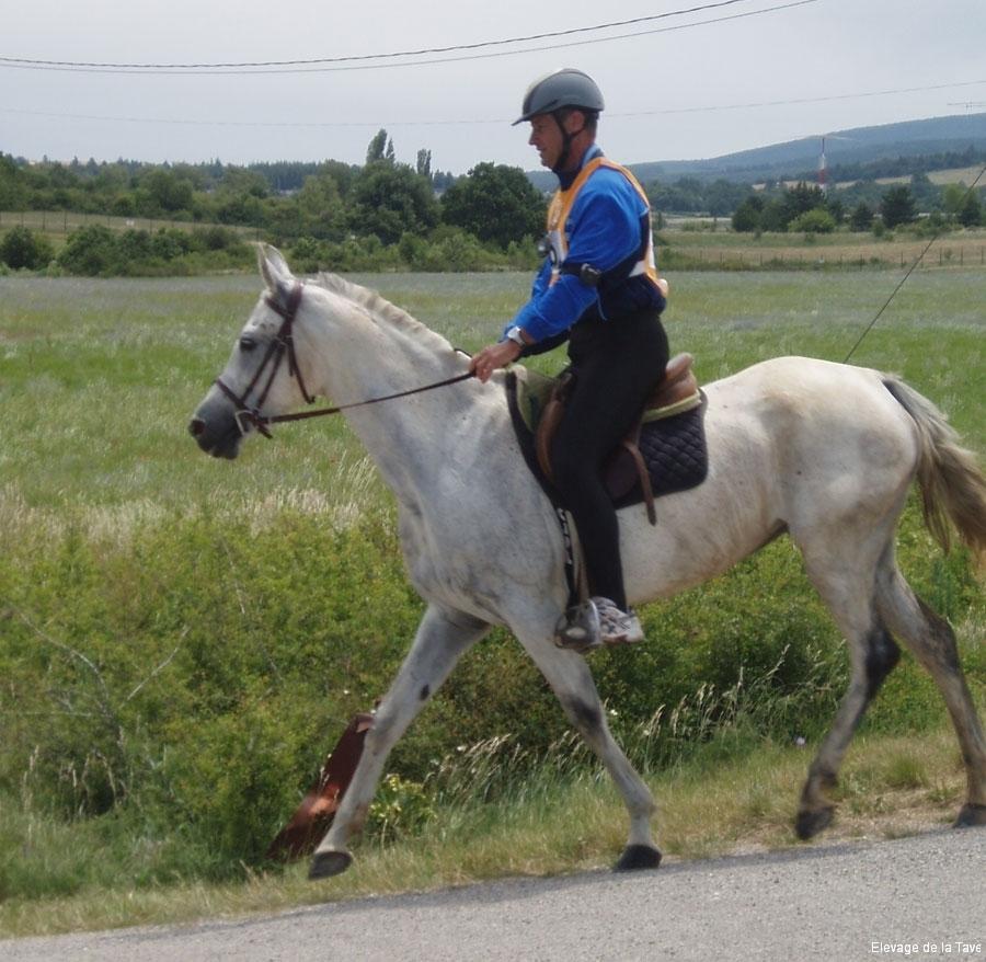 barso-60km-2010