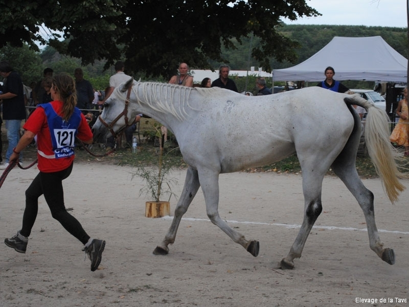 transardeche2011-1